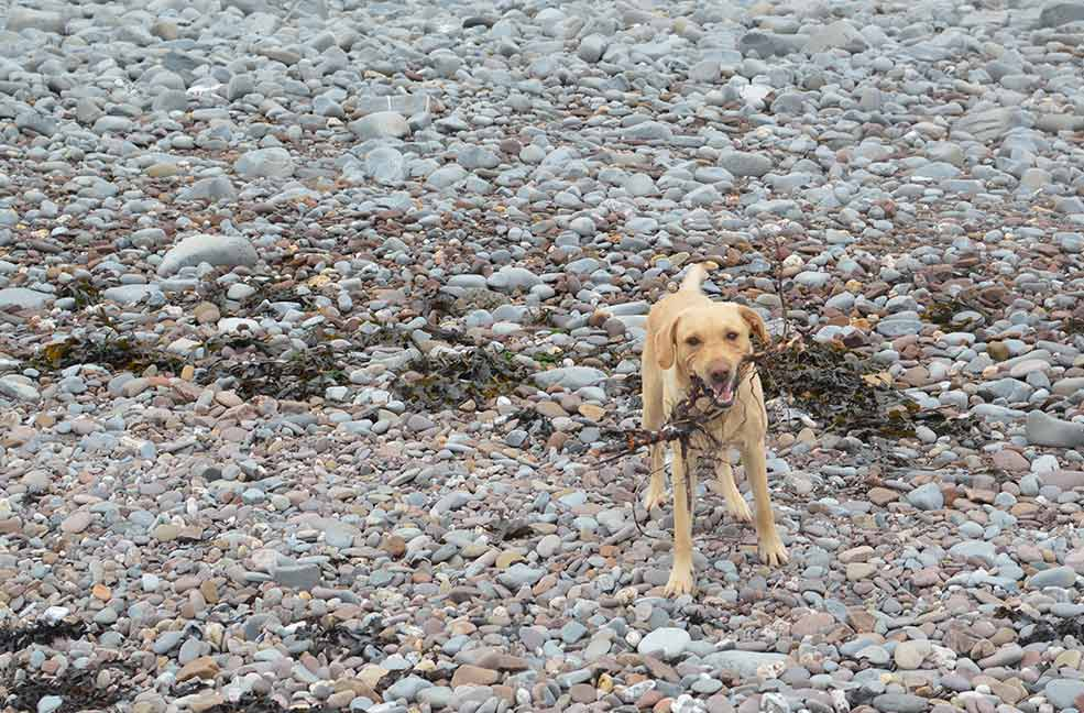 Dogs will find plenty of things to keep them busy at Kilve, like sticks!