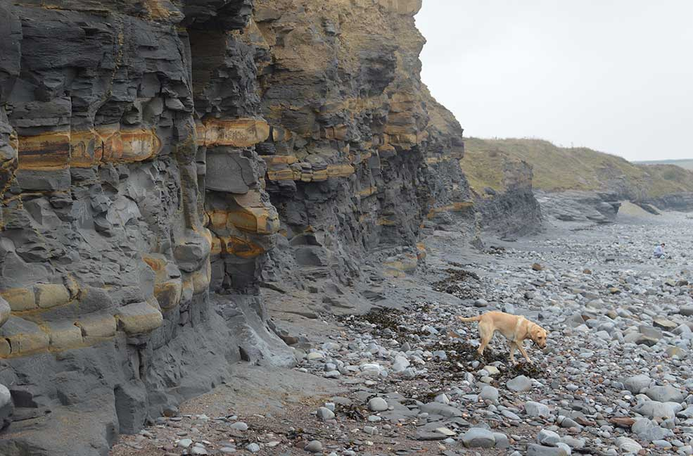 Kilve Beach has lots of hidden fossils in the cliffs and the pebbles underfoot.