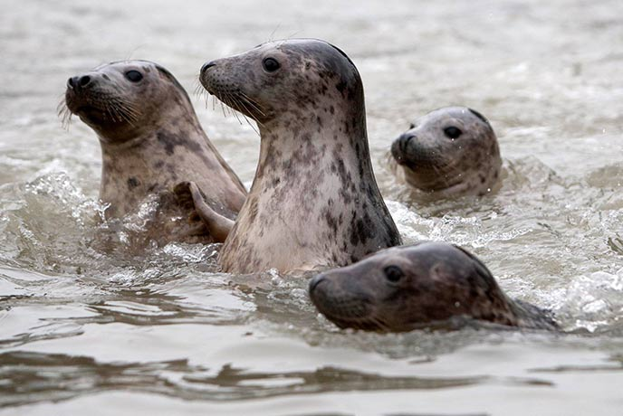 Spot your favourite seal at this fun family place to visit.