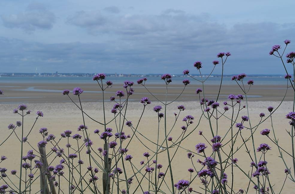 Ryde beach kite flying