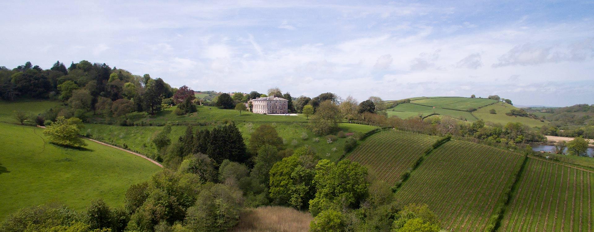 Sharpham Estate Vineyard