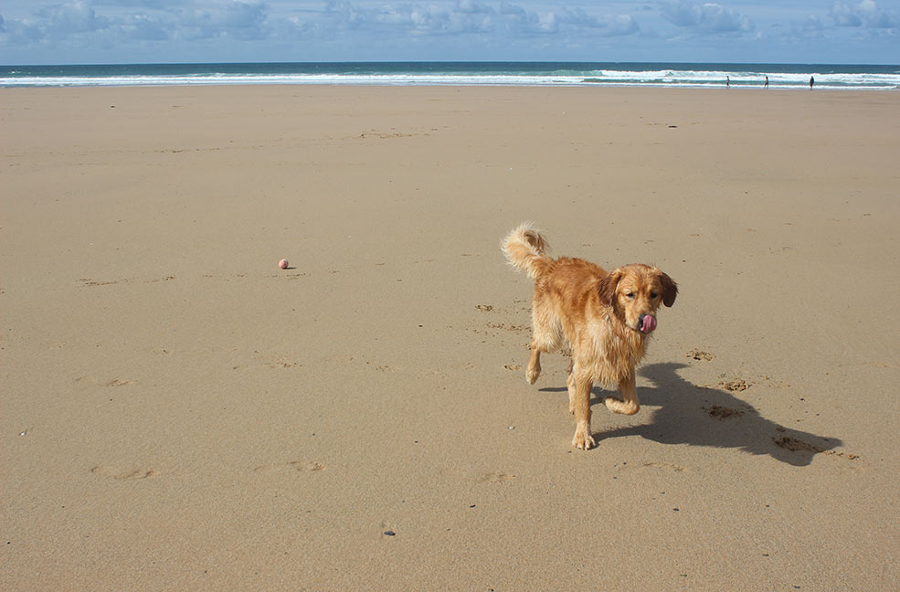 Dog friendly all year round, Watergate Bay is an ideal sandy beach for walkies on the north coast.