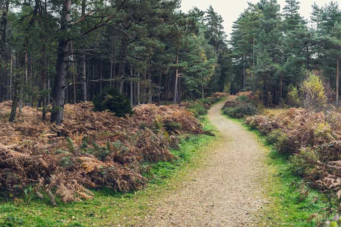 Walking through the forest with crunchy leaves underfoot