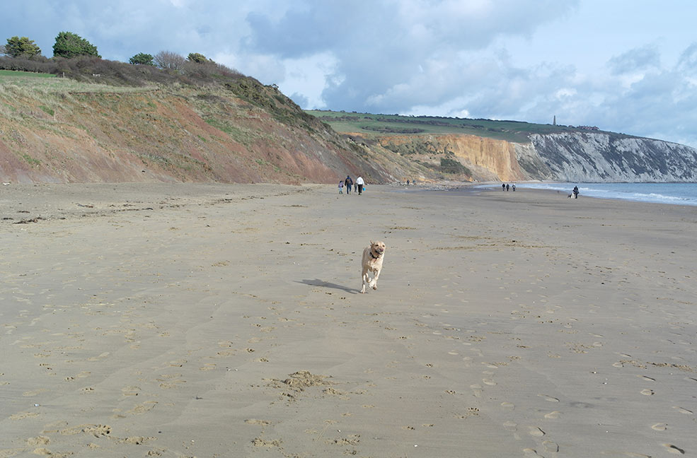 Dog friendly beach Isle of Wight