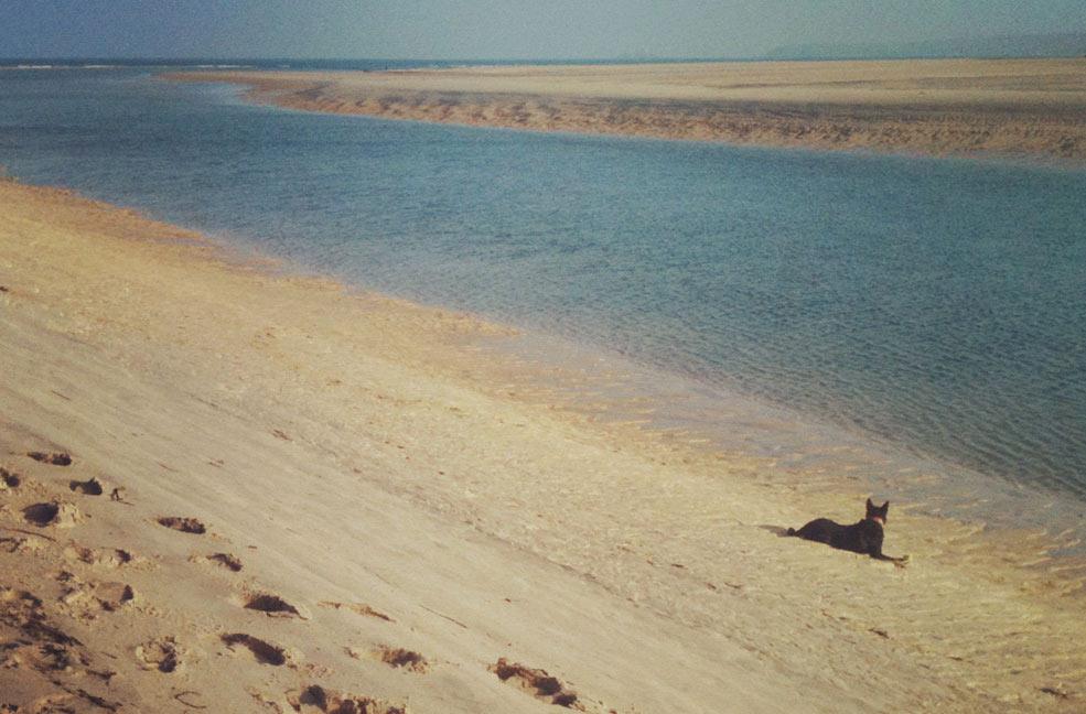 Porthkidney Sands by H Spurway
