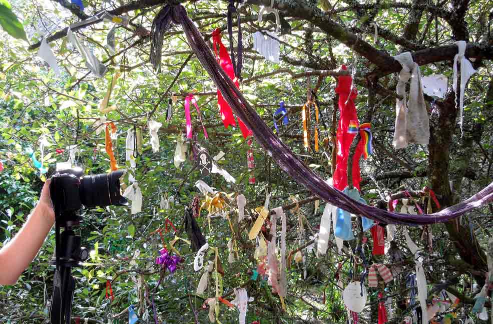 The Magic of the Wishing Tree at Madron