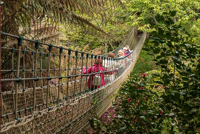 Scramble across the rope bridge at the Lost Gardens of Heligan.