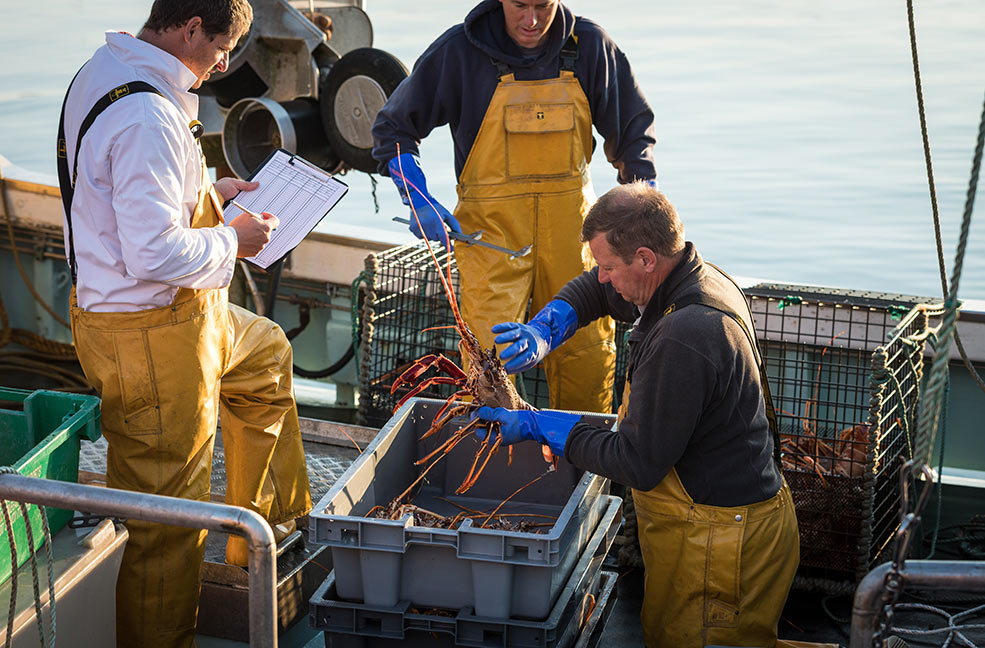 Bringing in the catch of the day to Newlyn ready to be sold at Newlyn Fish Market.