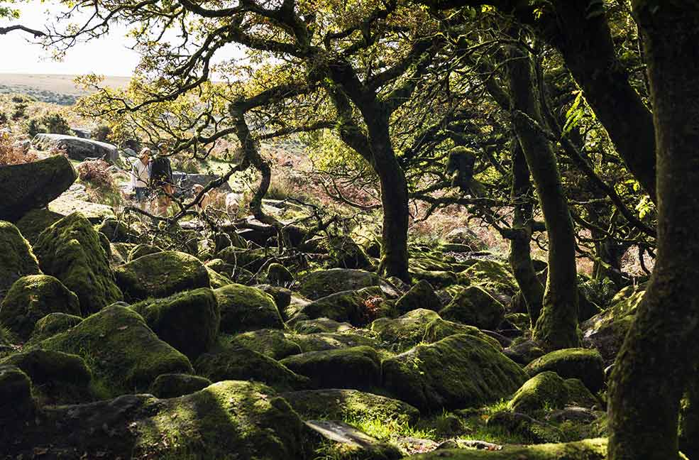 Wistmans Wood looks like a scene from a fantasy film with the crooked trees and tangled branches.