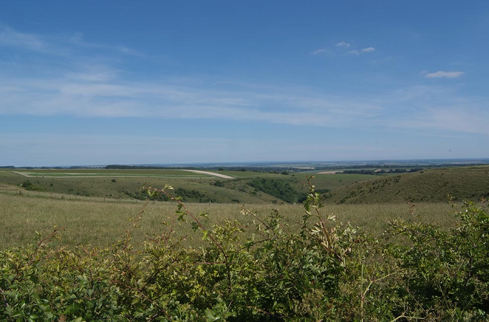 Walk for miles through the grasses and rolling hills of Cranborne Chase.