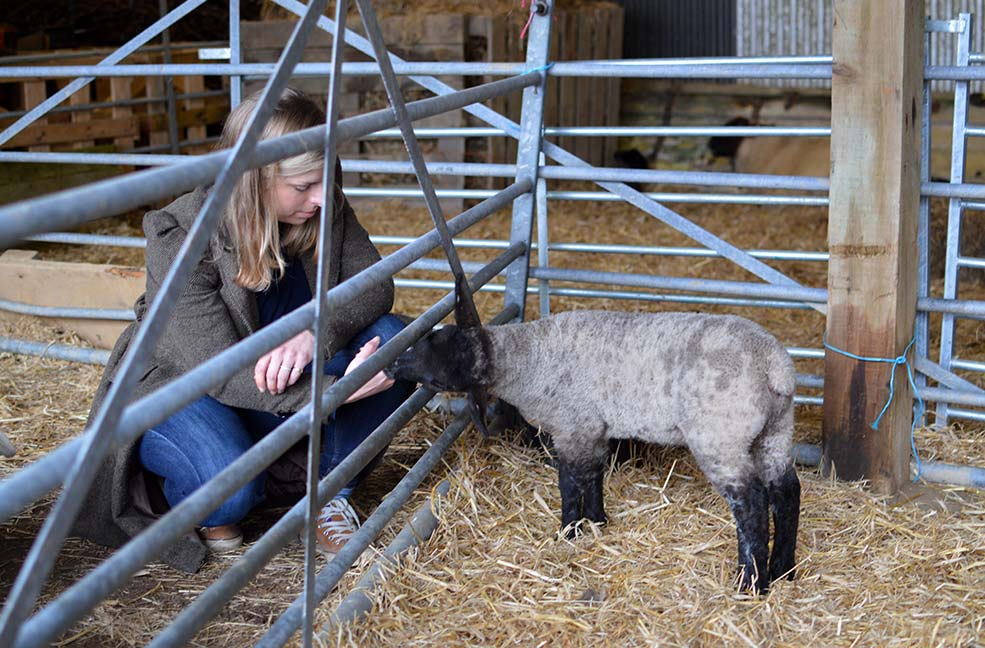 The new lambs at Nancarrow farm were part of the spring gathering.