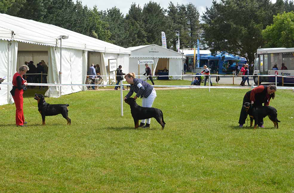 The Royal Cornwall dog show.