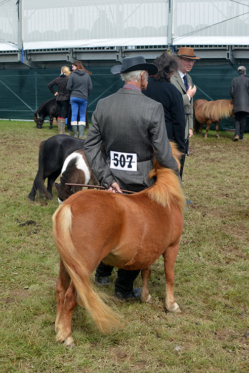 A showman giving his pony a cuddle before they head into the ring.