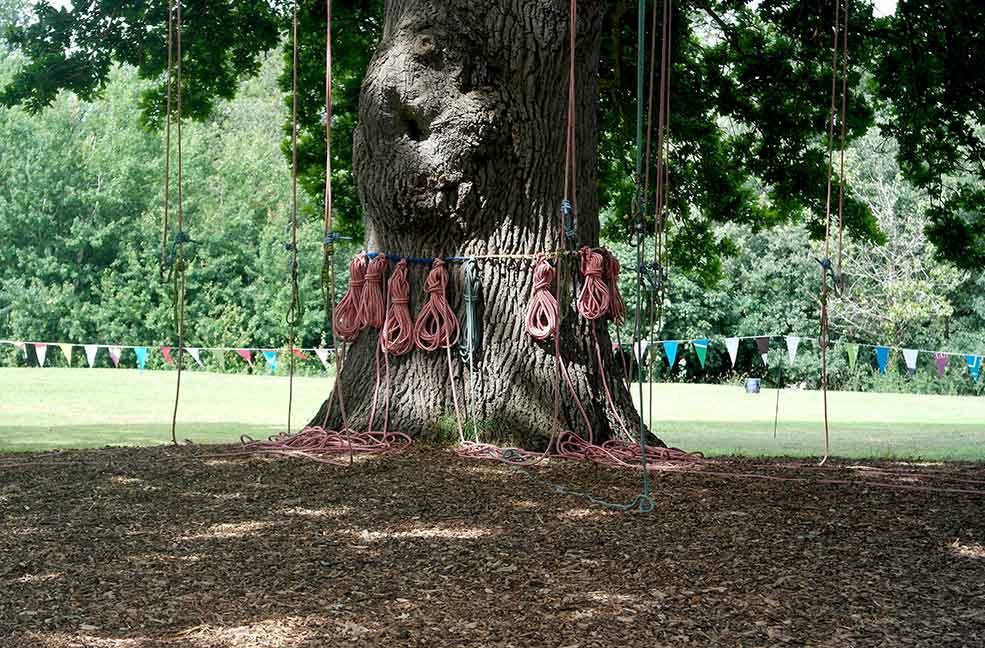 Ryde Oak Tree