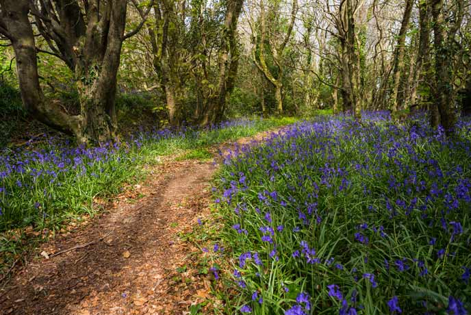 Spring at Tehidy woods