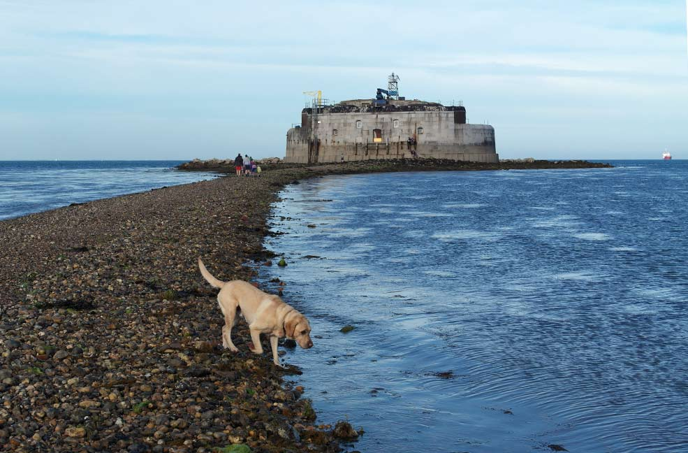 Nigel the dog loved playing in the sea as we walked to St Helens Fort and back to the shore.