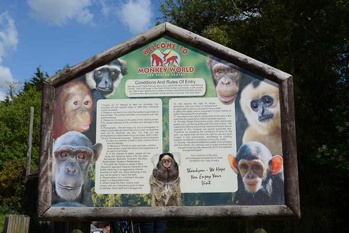 Monkey World is just outside Tolpuddle