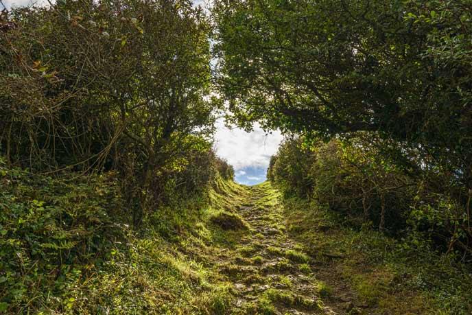 Woodland walks in Pembrokeshire