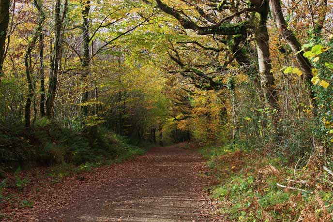 Canaston Woods, Pembrokeshire, Wales