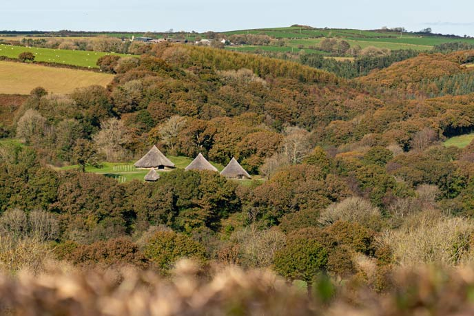 Woodland walks in Pembrokeshire