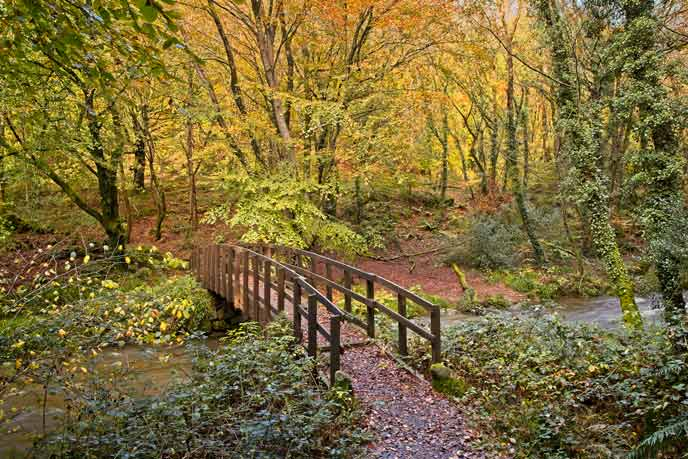 Gwaun Valley Woods, Pembrokeshire, Wales