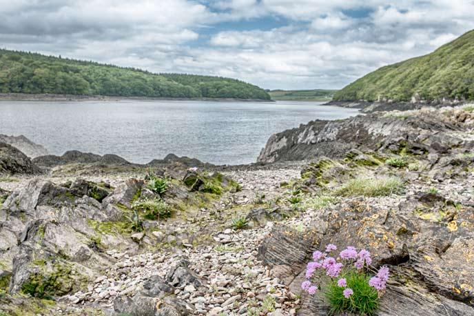 River Cleddau, Wales
