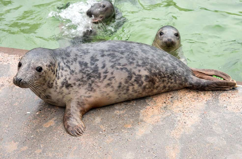 Admire the lovely seal pups on a spring day out to the seal sanctuary.