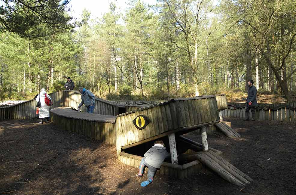 Top 5 Best Things To Do In The New Forest