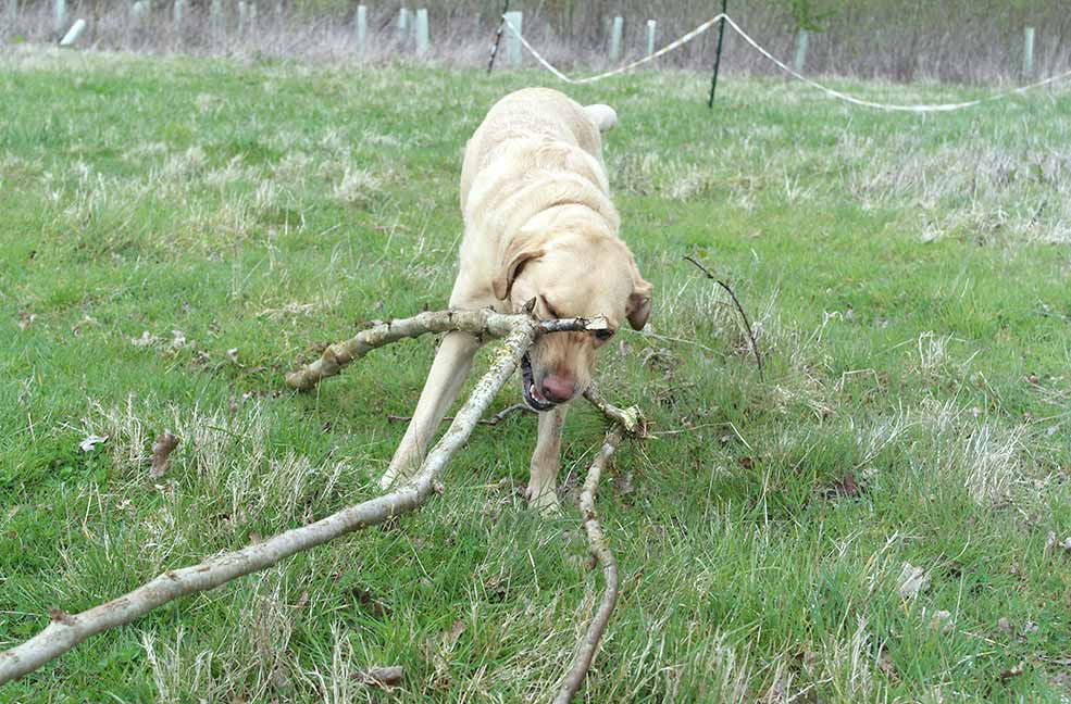 Nigel playing with a stick he found on our route.