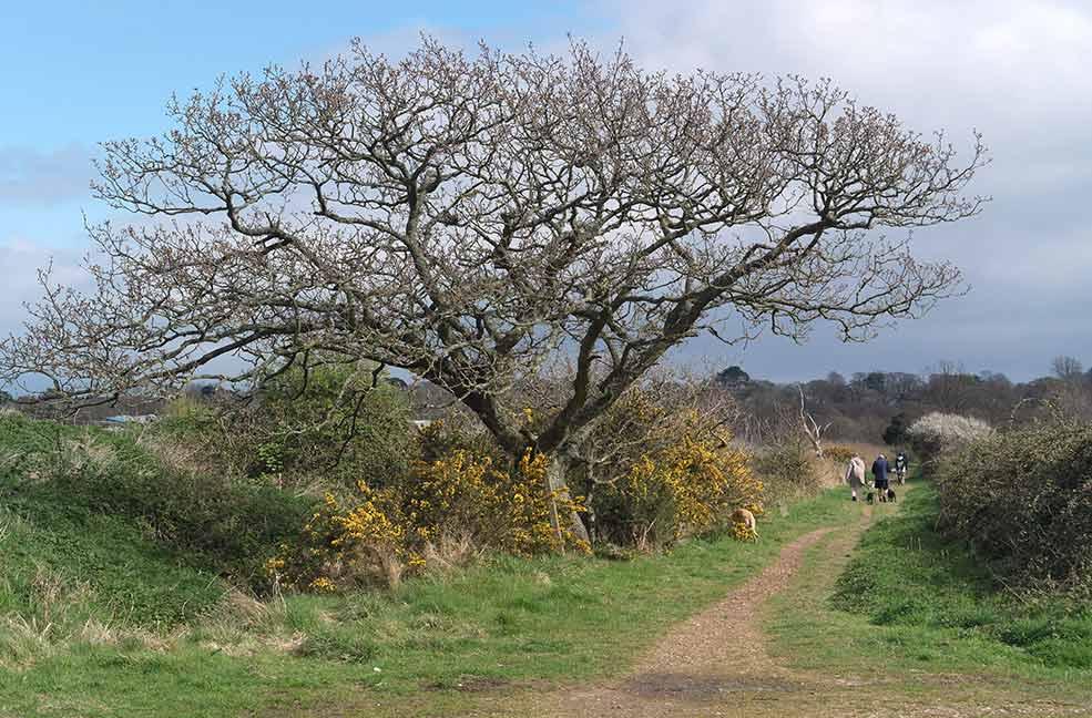 Brading Marshes circular walk