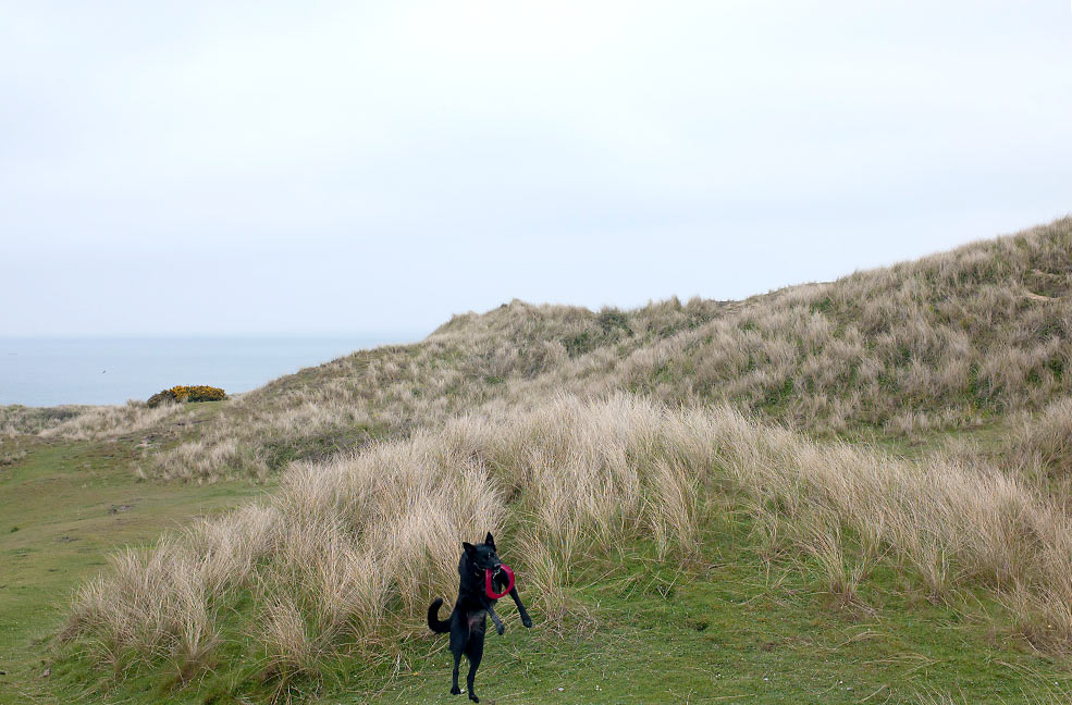 The Best Beaches To Walk With Your Dog In Devon