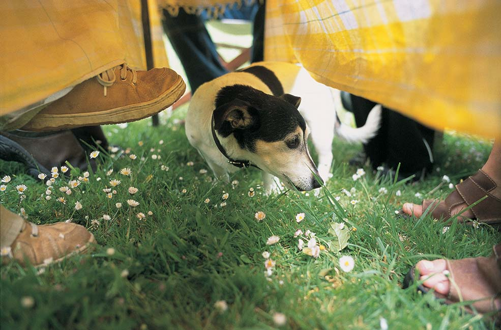 5 dog friendly places to eat in Cornwall