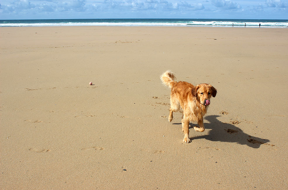 Cornish Dog Walks: Watergate Bay