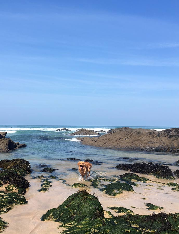 Monty discovered the rock pools on his visit to Fistral beach near Newquay.