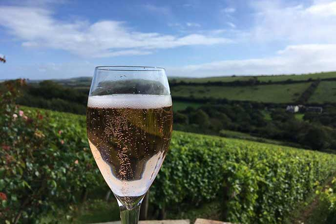 Lush scenes at the Camel Valley Vineyard.