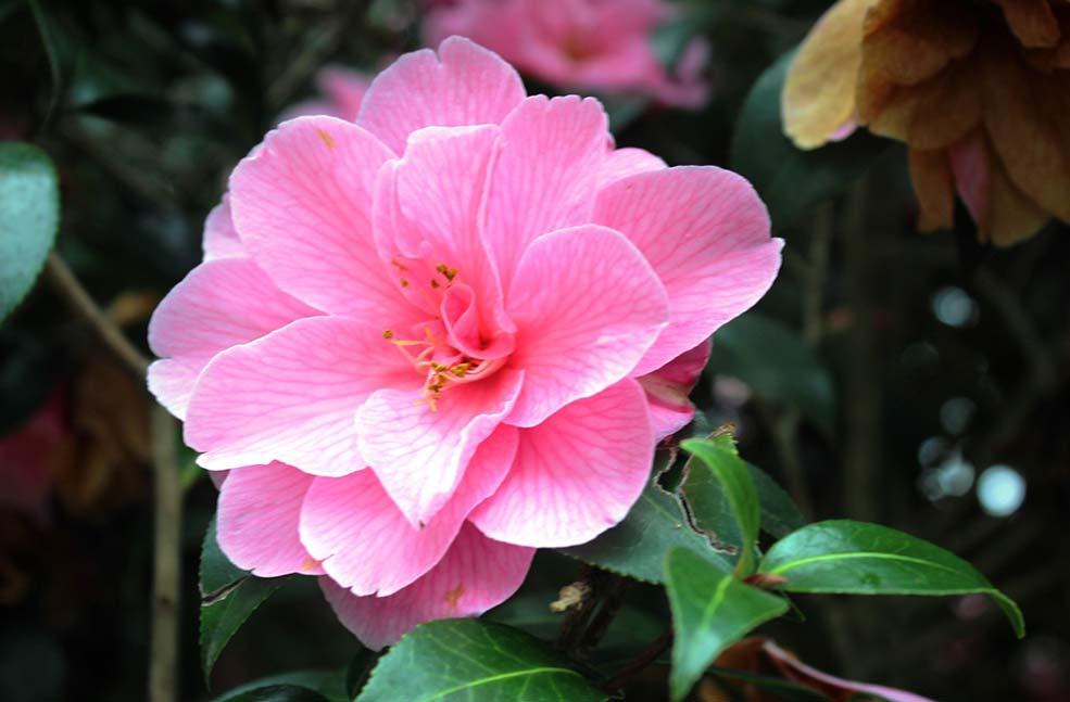 Helford flower