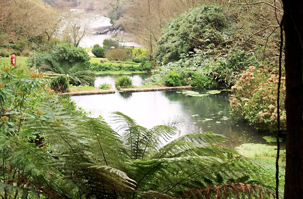 Helford garden