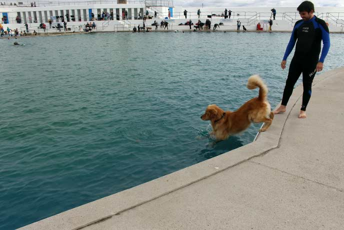 Jumping in with Monty the dog!