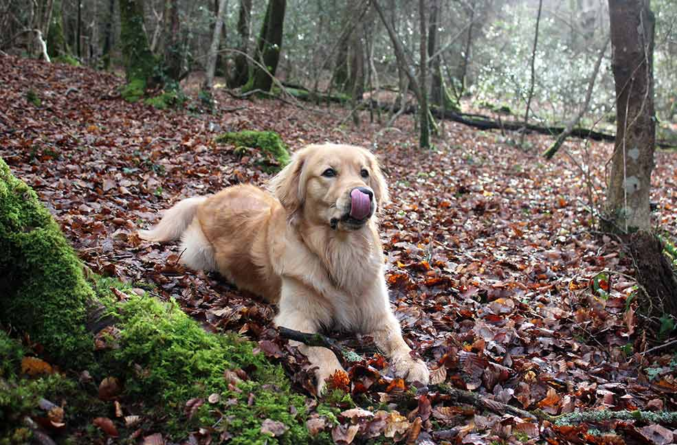 Monty's dog walk in Ethy Woods