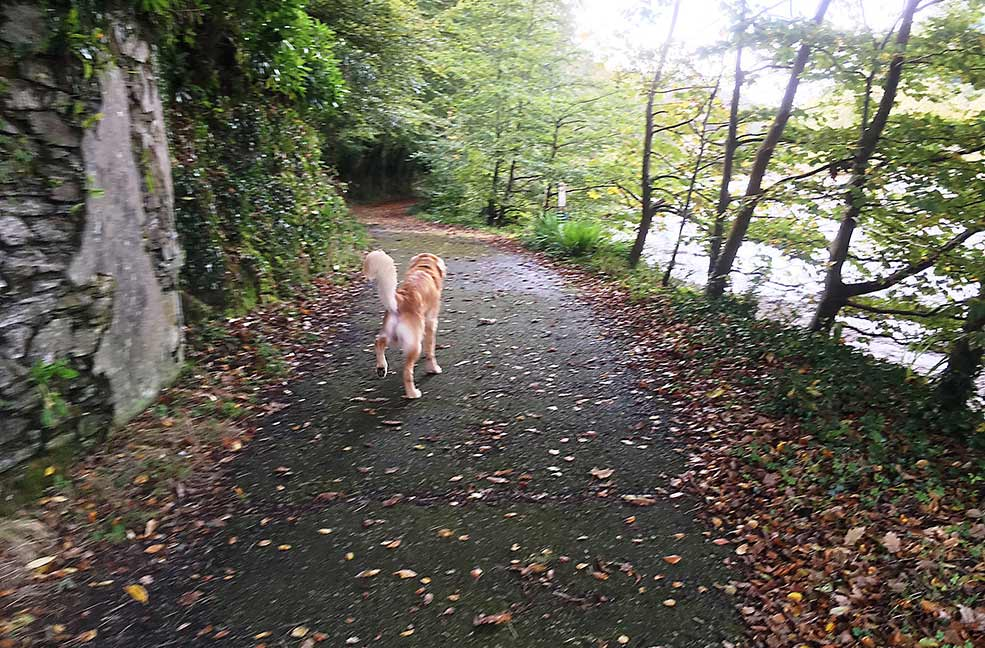 Lerryn riverside dog walk