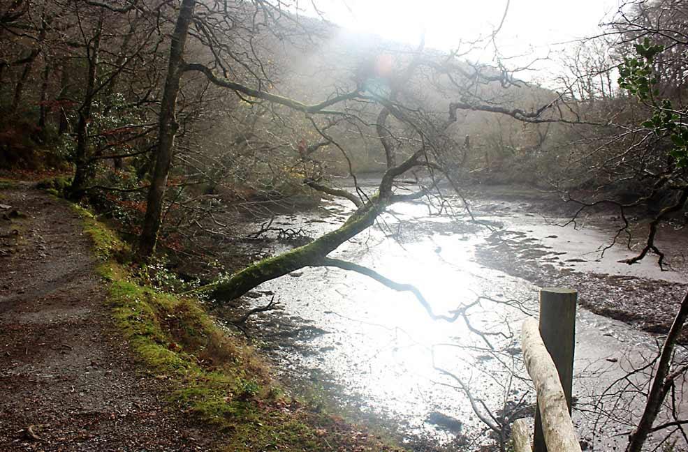 Lerryn riverside
