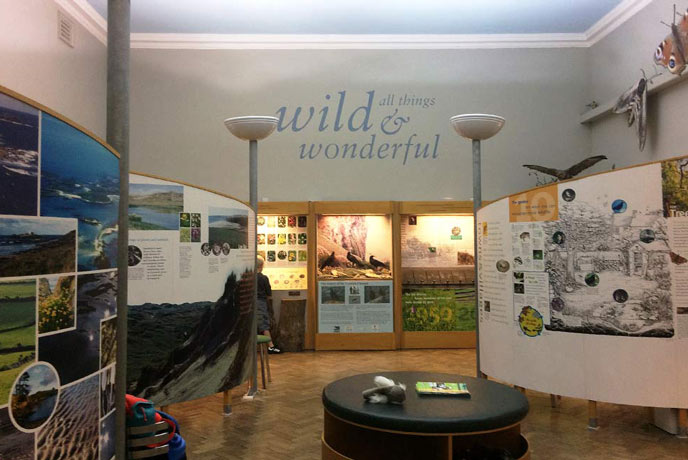 Wild and Wonderful in Royal Cornwall Museum