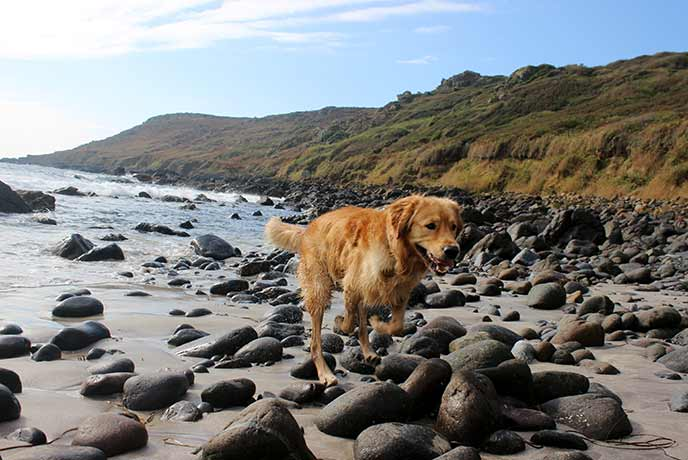 Take your pet pooch to the beach for fresh air and frolics in the sea.