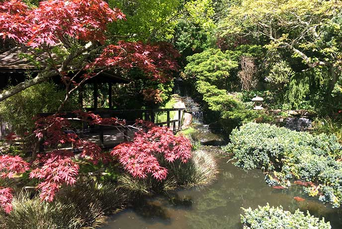 Explore the Japanese Garden near Newquay for a spring day out to remember.