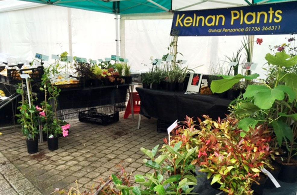 Kelnan Plants Truro farmers market