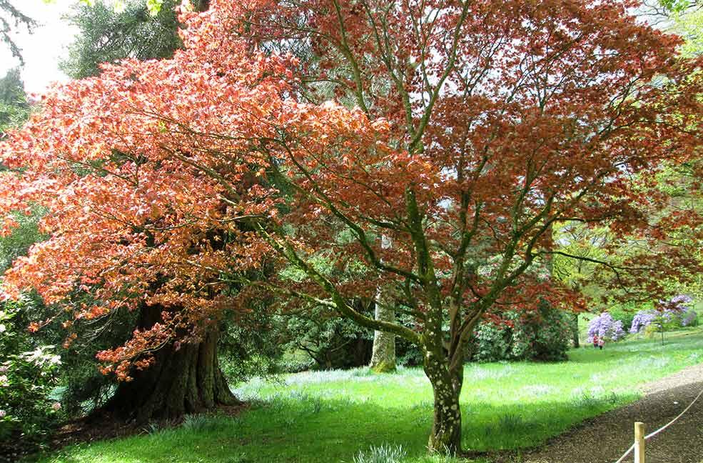 Colourful autumn walks in Dorset