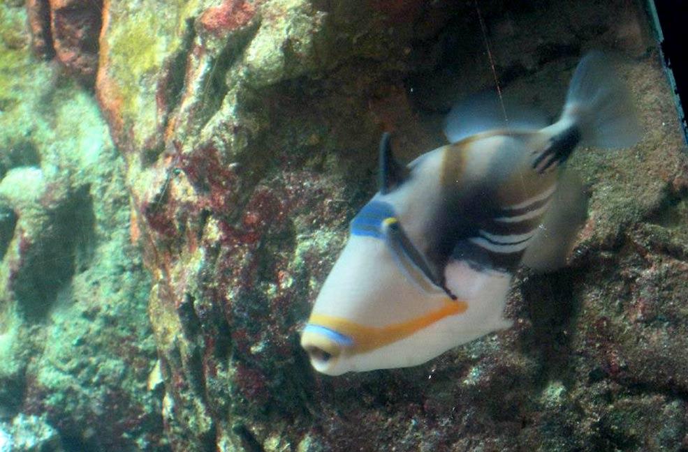 Rainbow fish at Bournemouth Oceanarium