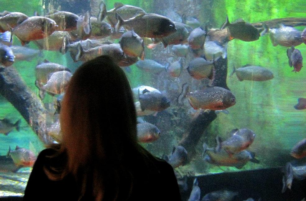Fish at Bournemouth Oceanarium