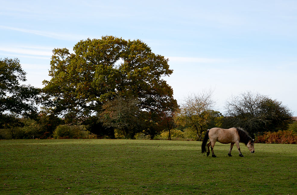 A short break in Burley, New Forest