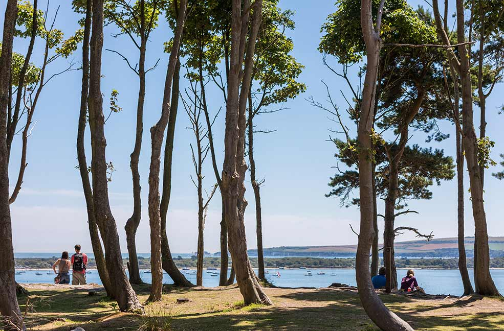 Brownsea Island is just a short ferry ride from the shores of Poole Beach.